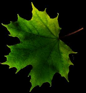 leaf-dark